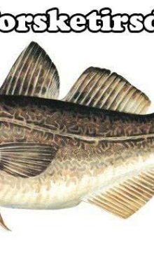 Fisk og tirsdag hører sammen. Derfor er det …